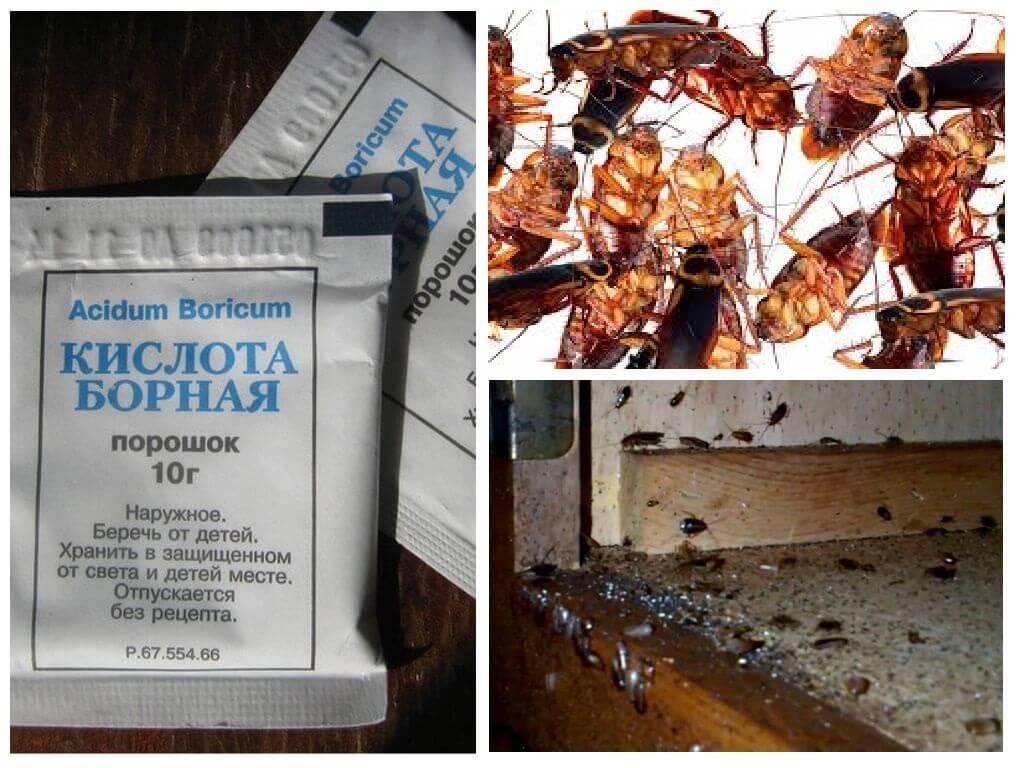 Как уничтожить тараканов своими руками