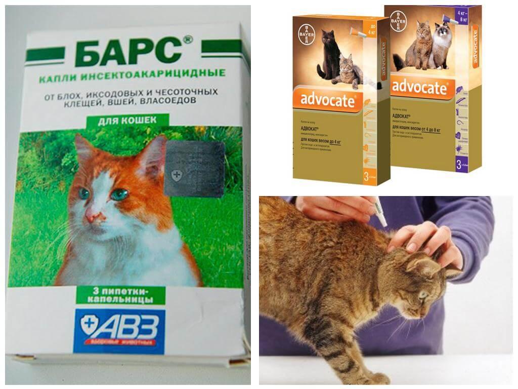 Средство от блох у кошек в домашних условиях