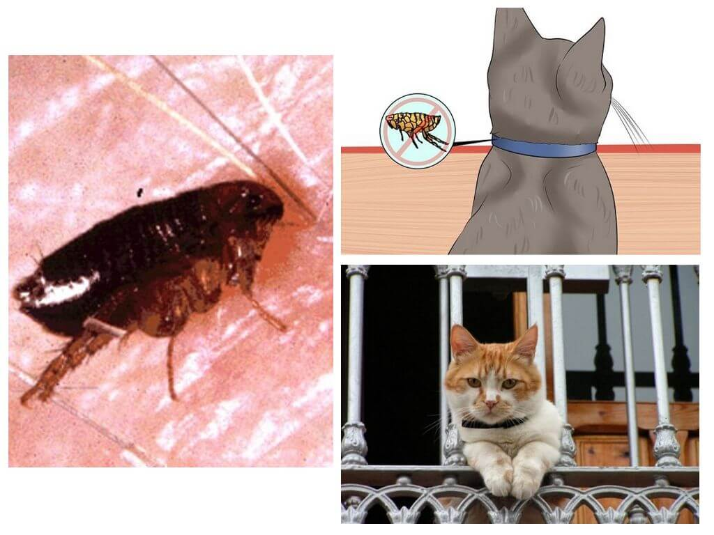 Как лечить котенка от блох в домашних условиях
