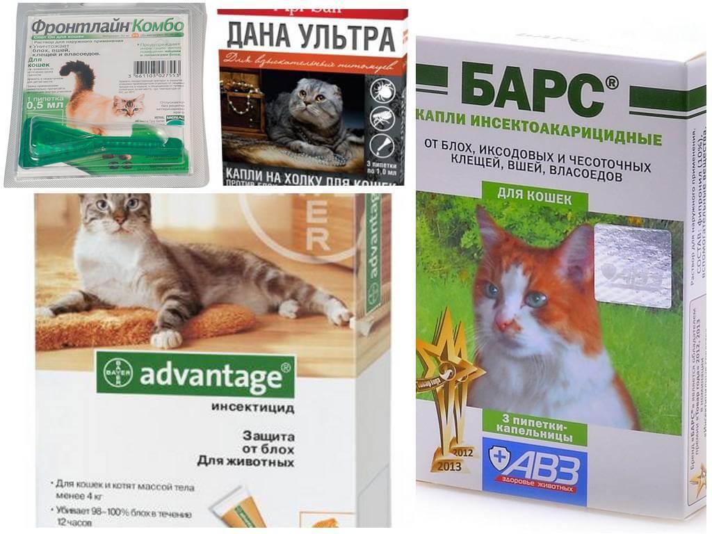 Народное средство от блох у кошек в домашних условиях