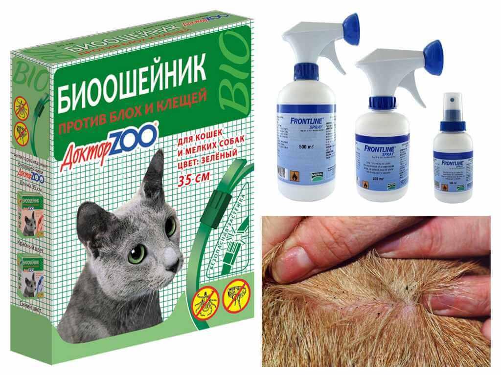 Как избавиться от блох котятам в домашних  764