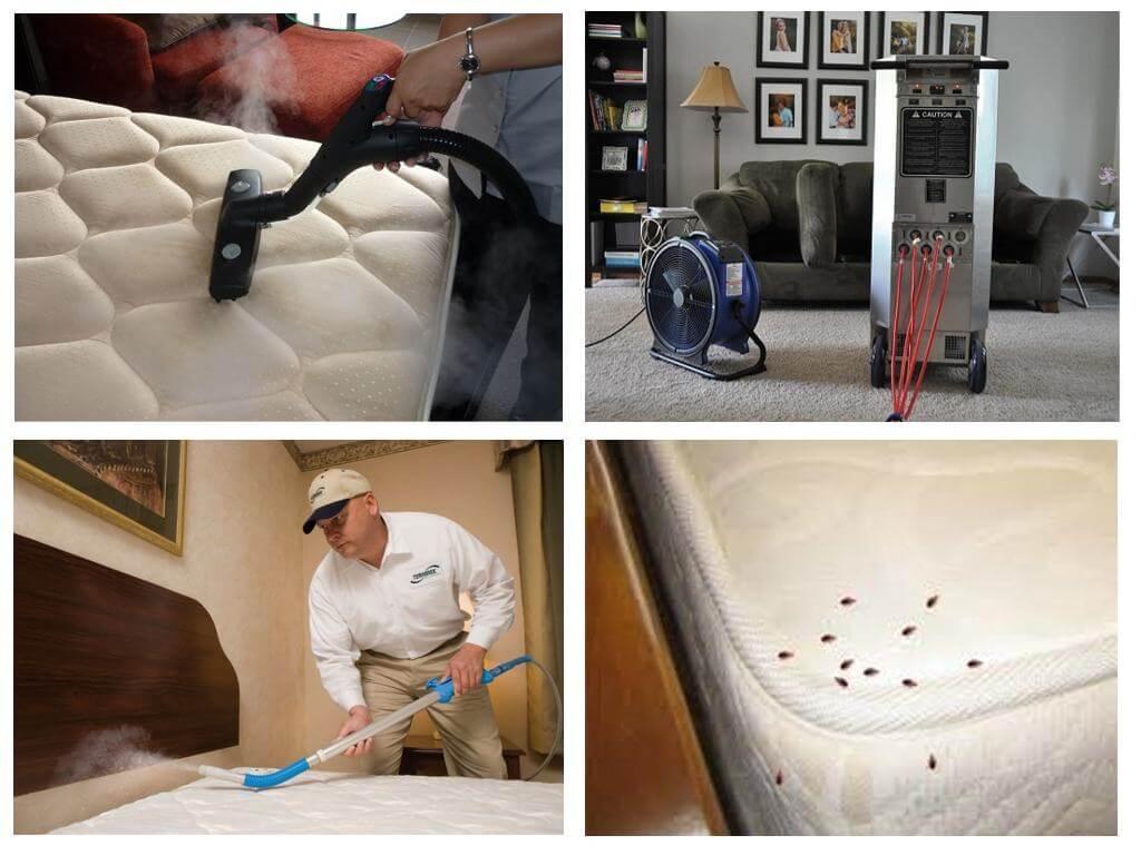 Борьба с клопами в квартире: эффективные способы, препараты и средства борьбы