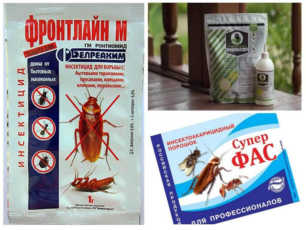 Отрава для тараканов в домашних условиях 351