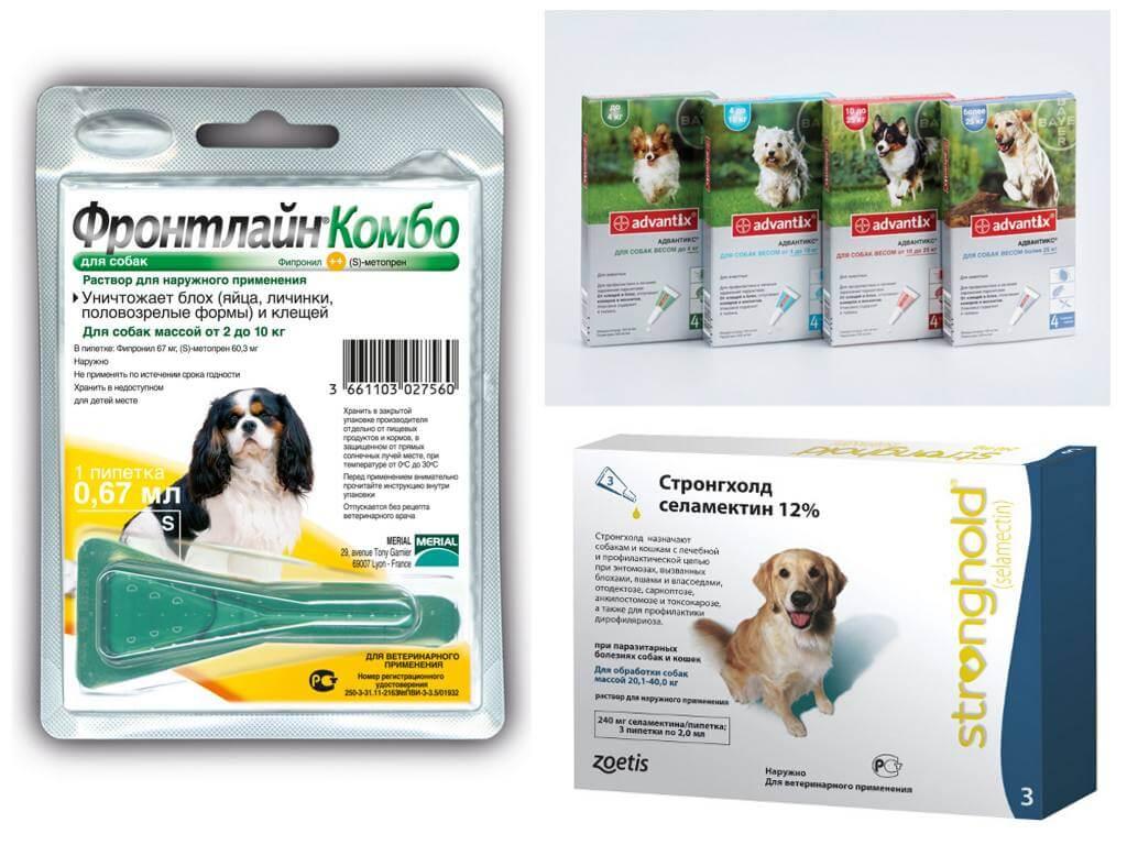 Как лечить собаку от блох народными средствами