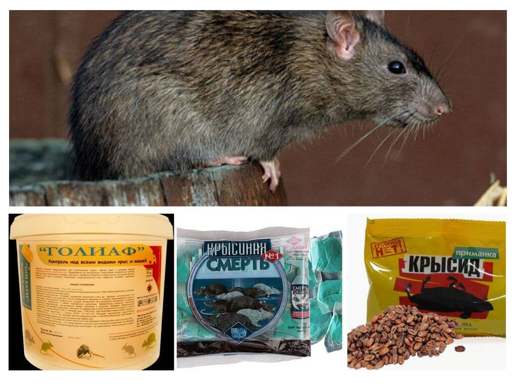 Мыши как сделать отраву для мышей 215