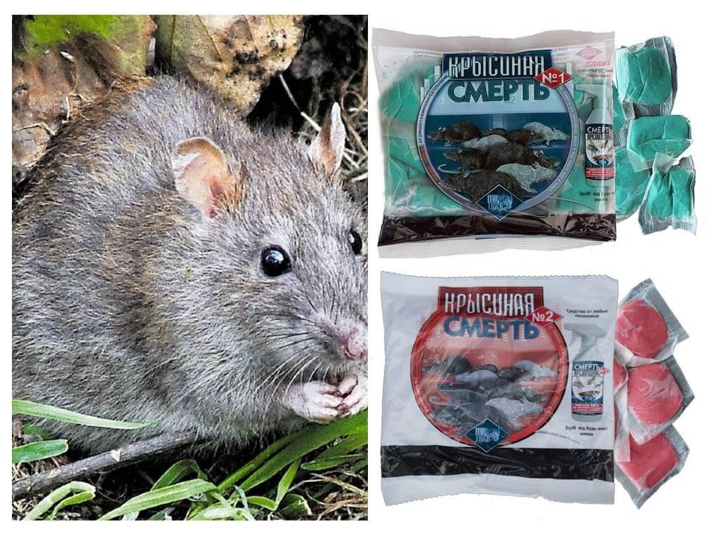 Мыши как сделать отраву для мышей 6