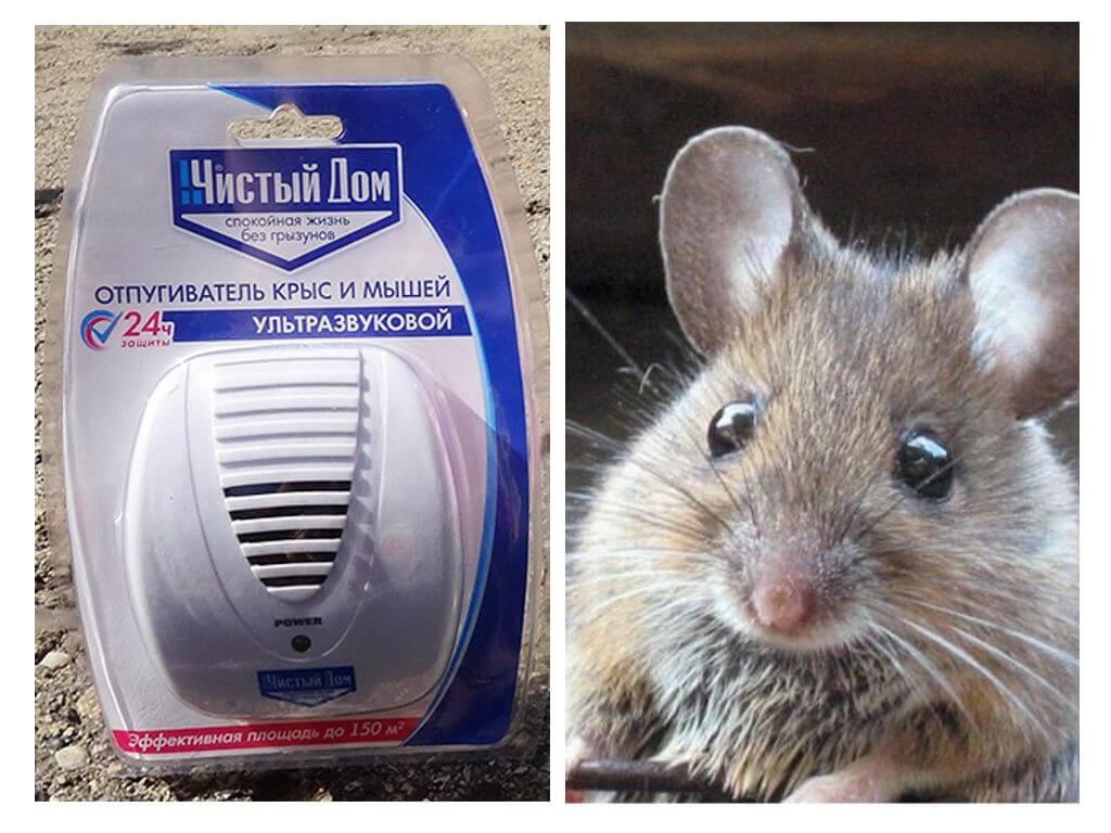 Ультразвук против крыс своими руками