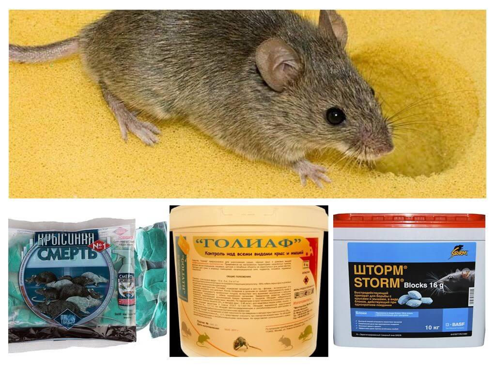 Мыши как сделать отраву для мышей 918