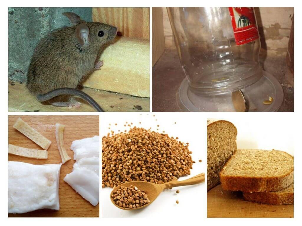 Мышиные ловушки своими руками