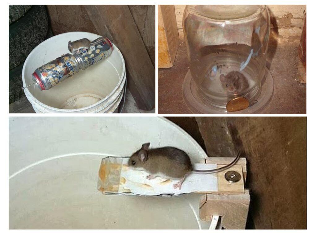 Как сделать крысоловку своими руками в домашних условиях