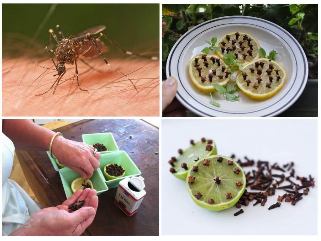 Лимон и гвоздика для защиты от летающих насекомых