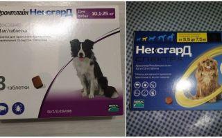 Таблетки Фронтлайн Нексгард от клещей и блох для собак
