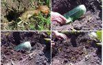 Обзор самодельных ловушек для медведки