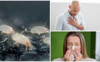 Симптомы и лечение аллергии на клеща в домашней пыли