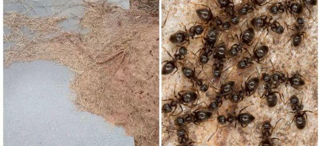 Как избавиться от муравьев на могиле