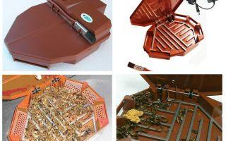Ловушка для тараканов — обзор самых эффективных видов