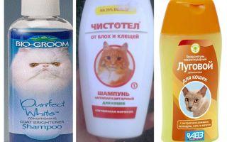 Как часто можно мыть шампунем от блох