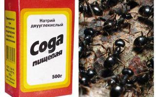 Сода против муравьев в огороде