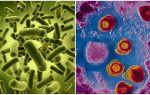Какие бактерии являются паразитами