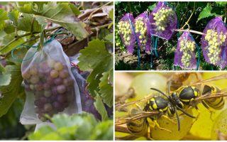 Мешочки от ос для винограда