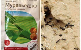Средство от муравьев Муравьед инструкция и отзывы