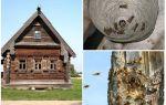 Как вывести пчел из деревянного дома и других мест