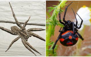 Описание и фото пауков Ростовской области