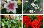 Какие цветы отпугивают моль