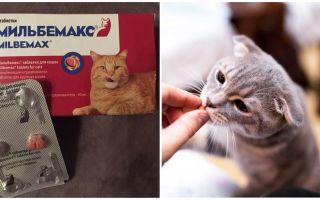 Инструкция по применению Мильбемакса для кошек и котят