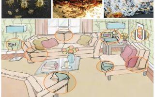 Чем и как травить клопов в домашних условиях