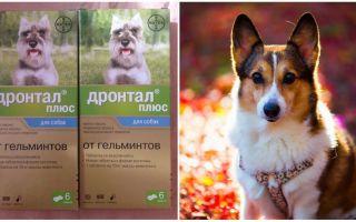 Инструкция по применению Дронтал Плюс для собак и щенков