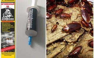 Средство Дохлокс от тараканов