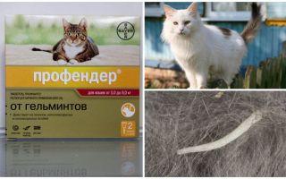 Инструкция по применению Профендера для кошек