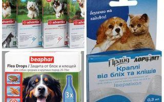 Средства от блох и клещей у собак