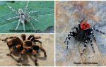Описание и фото пауков Волгоградской области