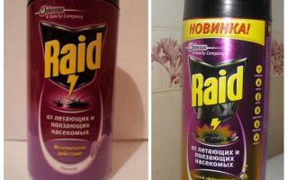 Средство Raid от клопов