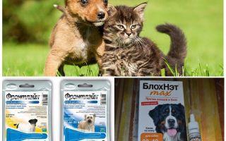 Чем и как защитить собаку от комаров и мошек