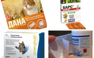 Лучшие средства от блох для кошек
