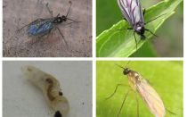 Как избавиться от мошек в комнатных растениях и цветочных горшках