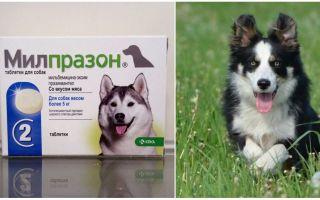Милпразон от глистов для собак и щенков