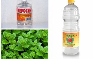 Чего боятся блохи: воды, хлорки, уксуса, керосина и др.