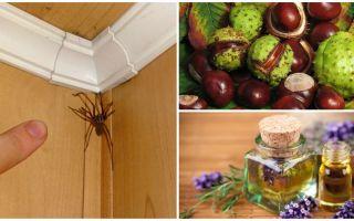 Методы и средства от пауков в квартире или частном доме
