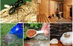 Как вывести муравьев из бани