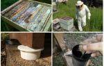 Как избавиться от муравьев на пасеке народными средствами