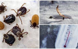 Где и как зимуют клещи, влияние температуры