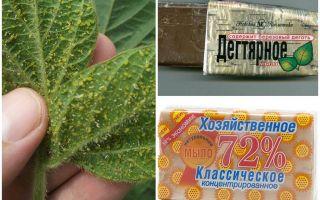 Дегтярное и хозяйственное мыло от тли на растениях