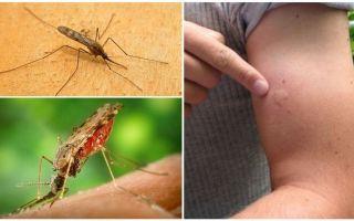 Что делать, если укусил малярийный комар
