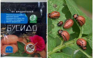 Средство от колорадского жука Бусидо: инструкция по применению, эффективность, отзывы