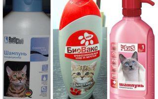 Шампуни от блох для котят и кошек