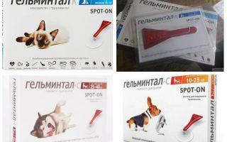 Капли Гельминтал на холку для кошек и собак